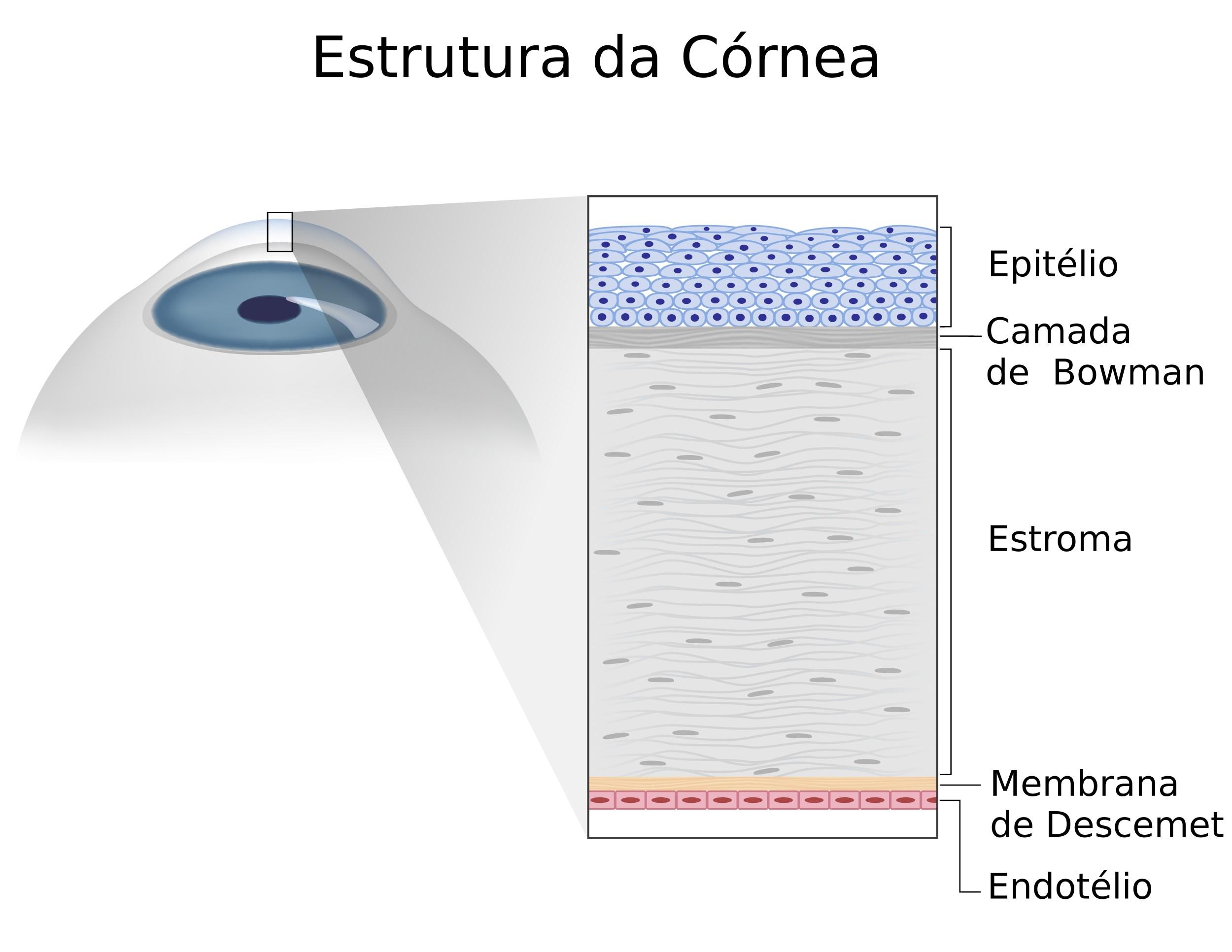 camadas da córnea